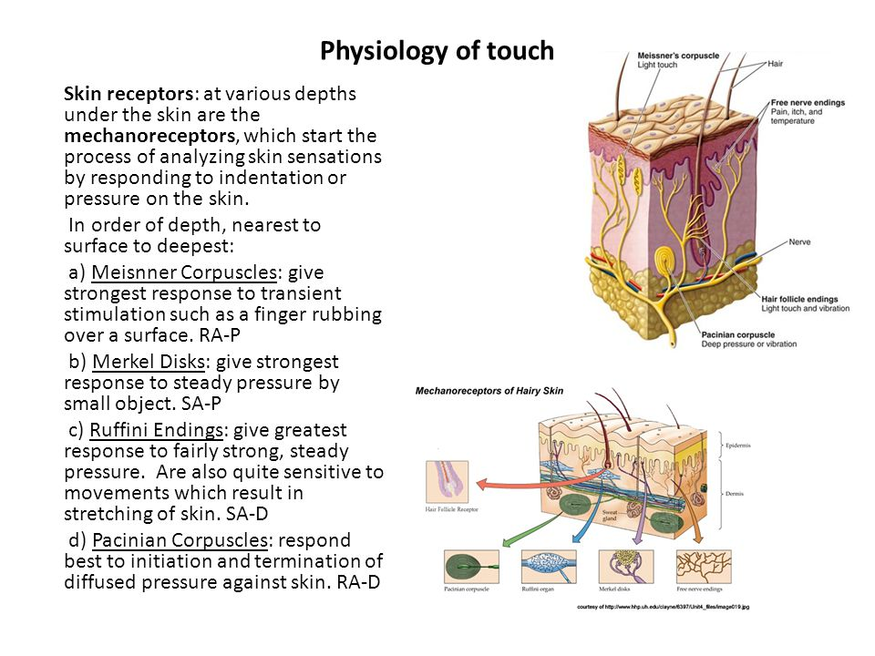 Physiology of touch Skin receptors: at various depths under the skin are the mechanoreceptors, which start the process of analyzing skin sensations by responding to indentation or pressure on the skin.