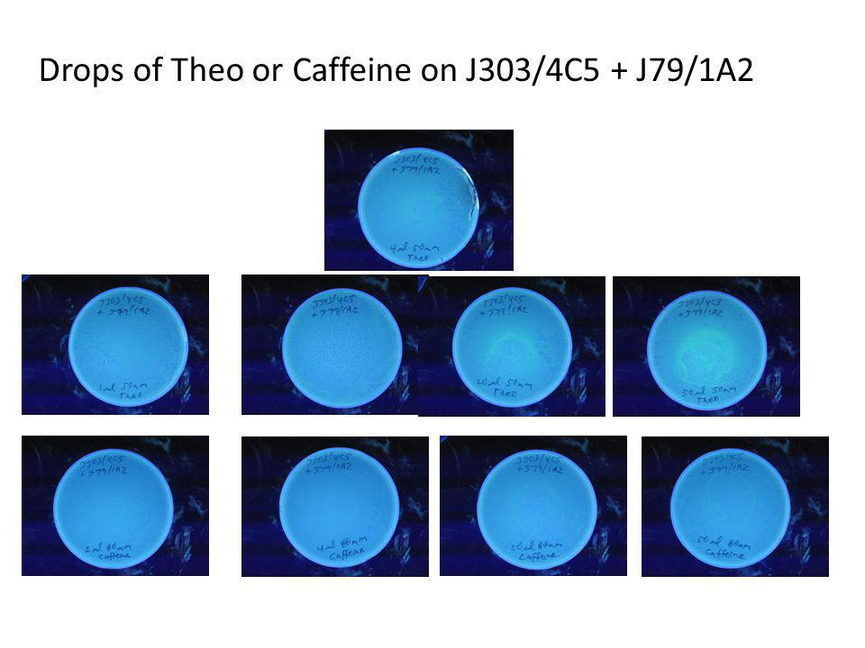 Drops of Theo or Caffeine on J303/4C5 + J79/1A2