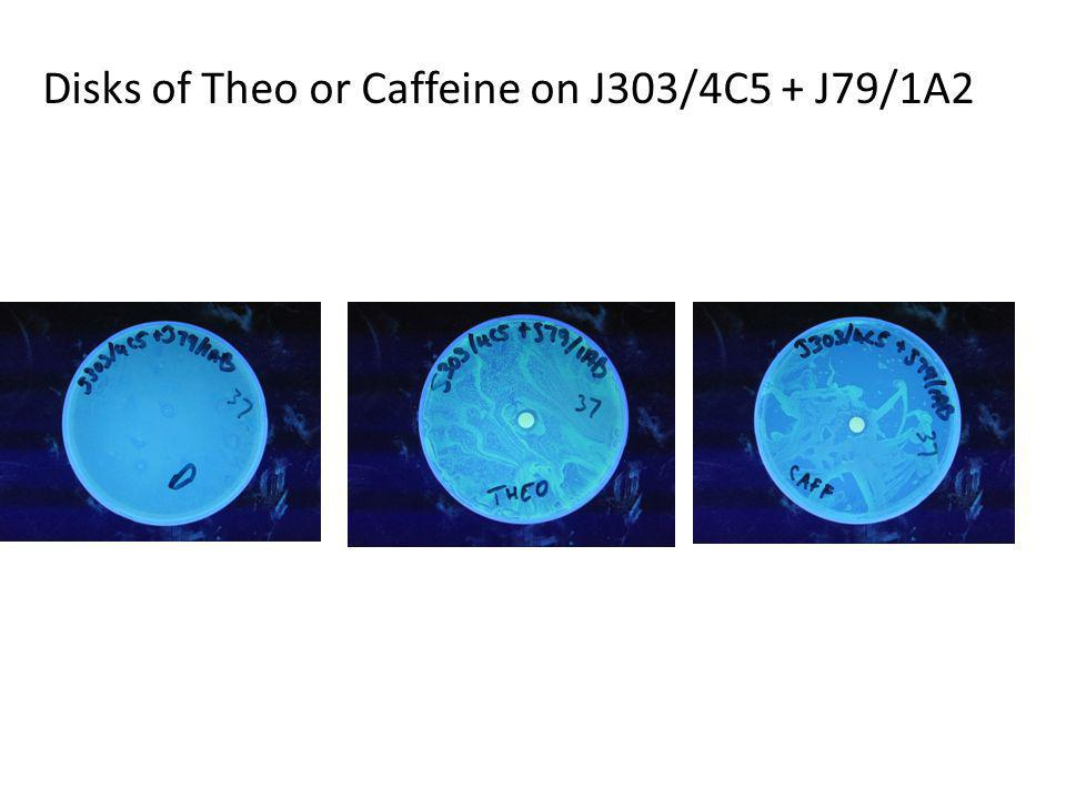 Disks of Theo or Caffeine on J303/4C5 + J79/1A2