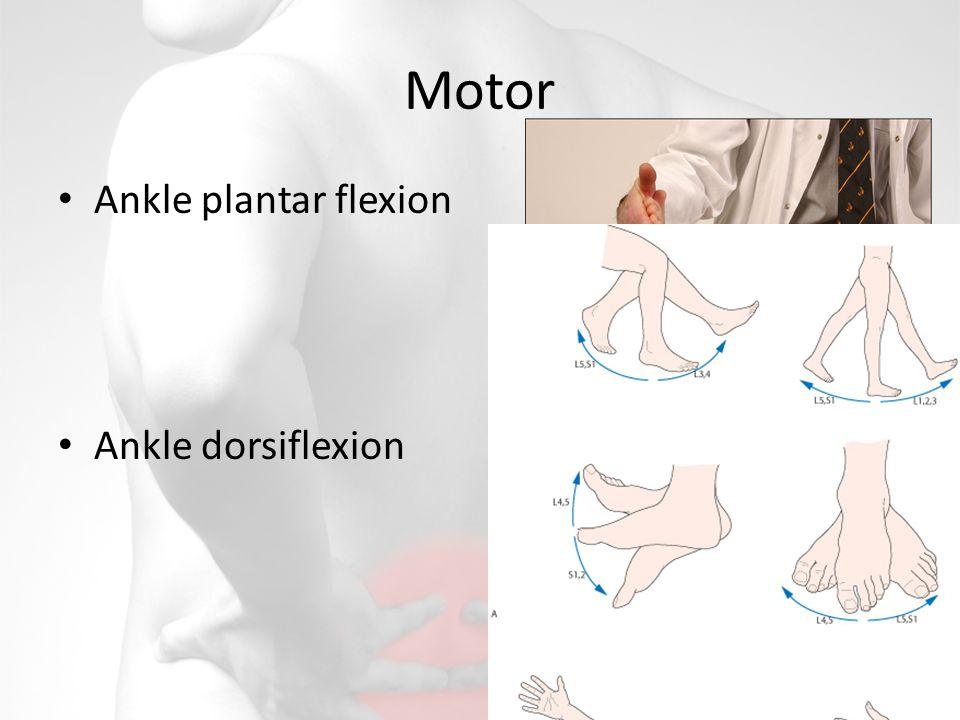 Motor Ankle plantar flexion Ankle dorsiflexion
