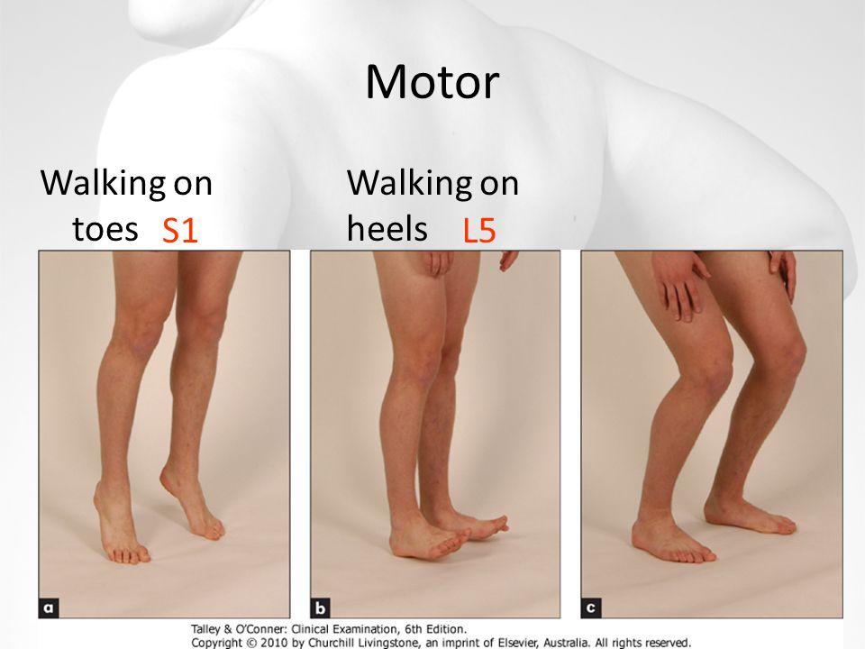 Motor Walking on toes Walking on heels S1L5