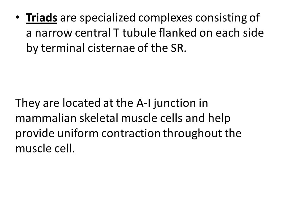 Triads are specialized complexes consisting of a narrow central T tubule flanked on each side by terminal cisternae of the SR. They are located at the