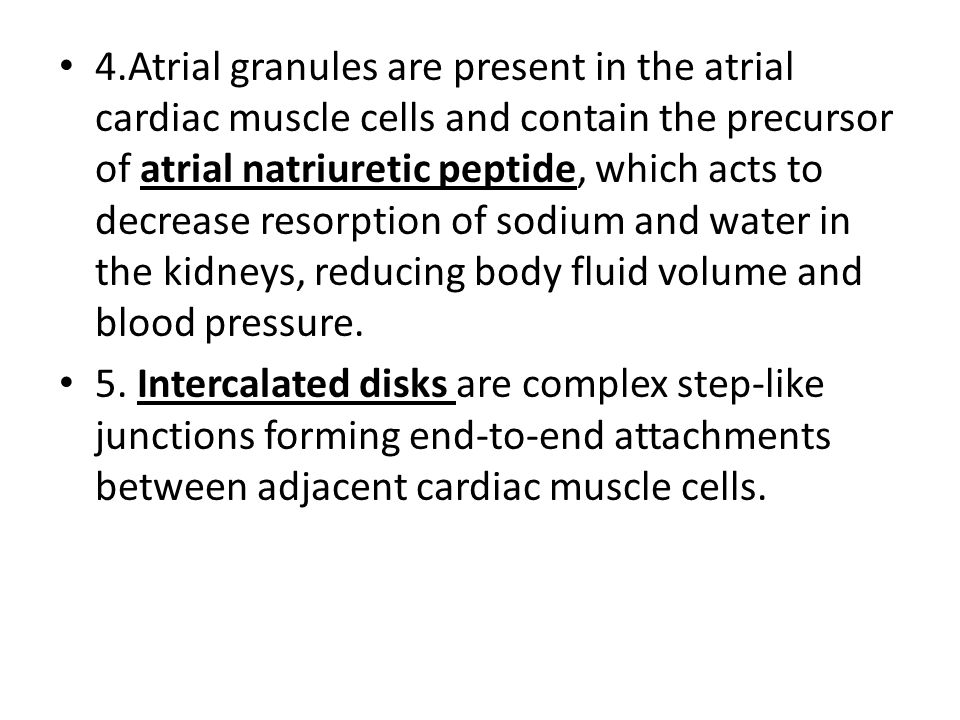 4.Atrial granules are present in the atrial cardiac muscle cells and contain the precursor of atrial natriuretic peptide, which acts to decrease resor
