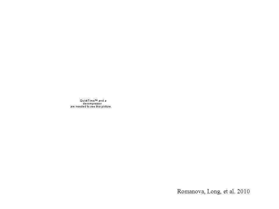 Romanova, Long, et al. 2010