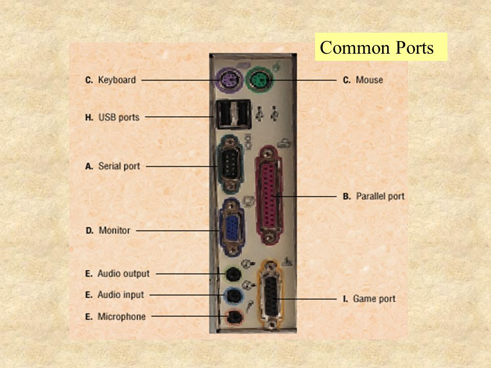 External devices are connected to the system by ports on the back of the computer. PCs feature ports for devices such as a printers and mice. A serial