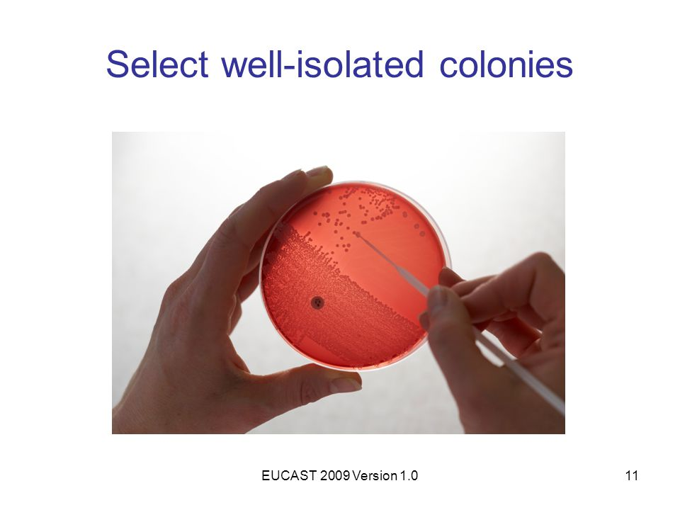 EUCAST 2009 Version 1.011 Select well-isolated colonies