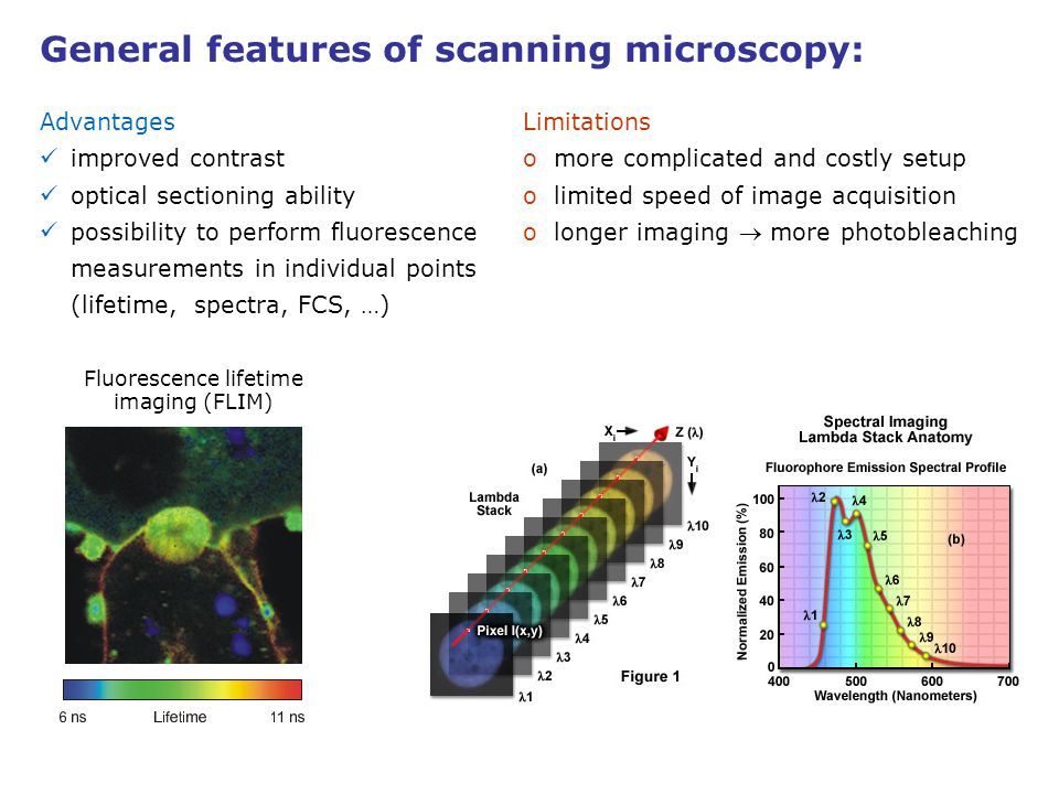 Advantages improved contrast optical sectioning ability possibility to perform fluorescence measurements in individual points (lifetime, spectra, FCS,
