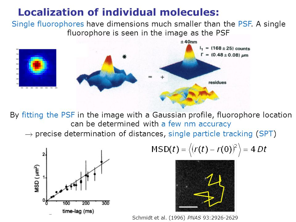 Localization of individual molecules: Single fluorophores have dimensions much smaller than the PSF. A single fluorophore is seen in the image as the