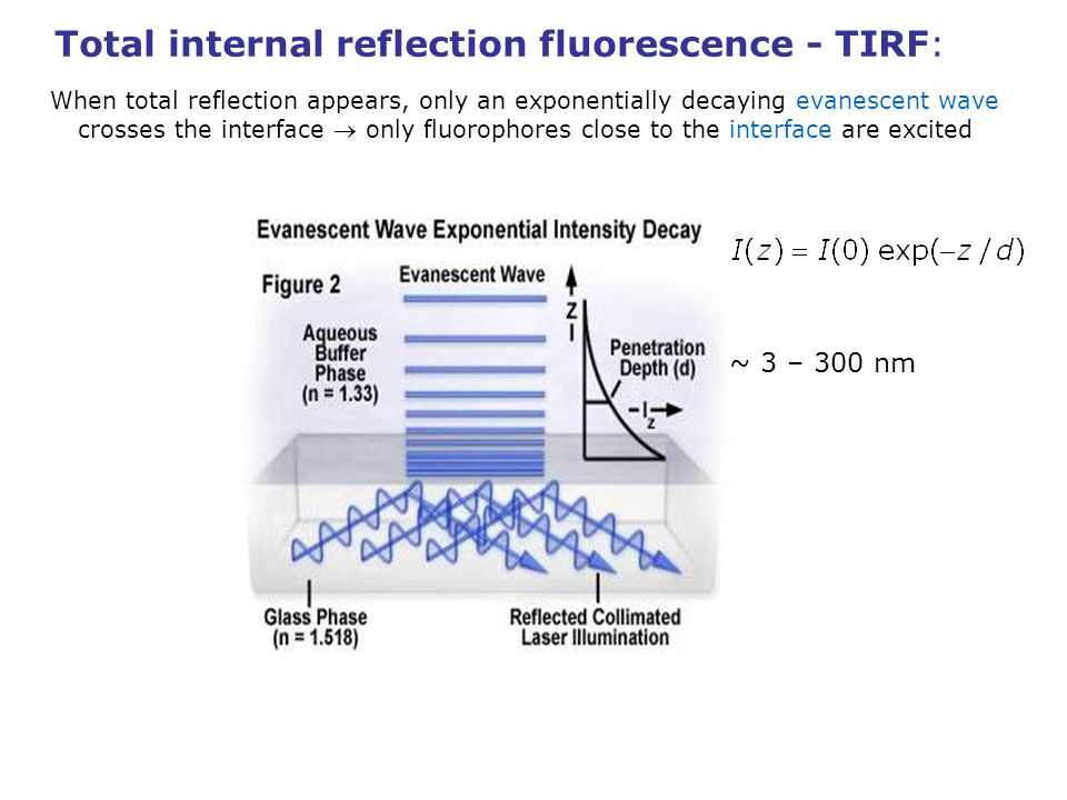 Total internal reflection fluorescence - TIRF: When total reflection appears, only an exponentially decaying evanescent wave crosses the interface only fluorophores close to the interface are excited prism-based objective-based