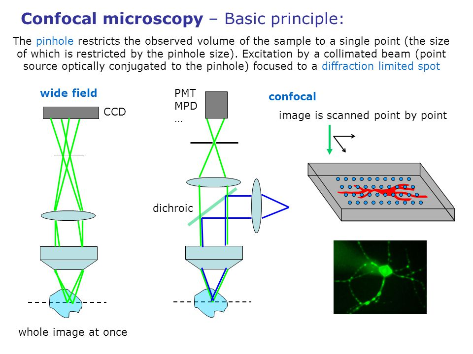 Confocal microscopy – Basic principle: The pinhole restricts the observed volume of the sample to a single point (the size of which is restricted by t