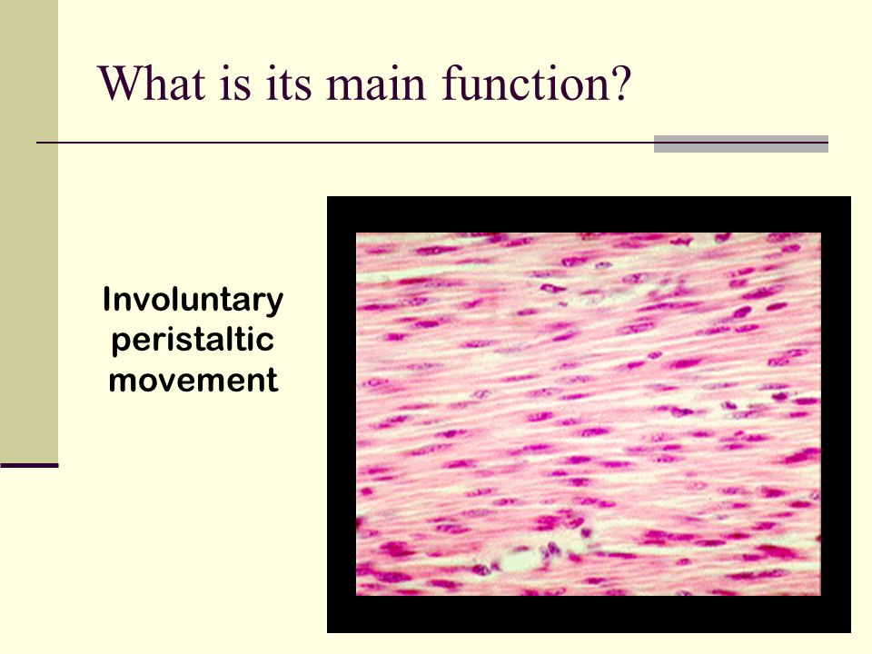 What is its main function? Involuntary peristaltic movement