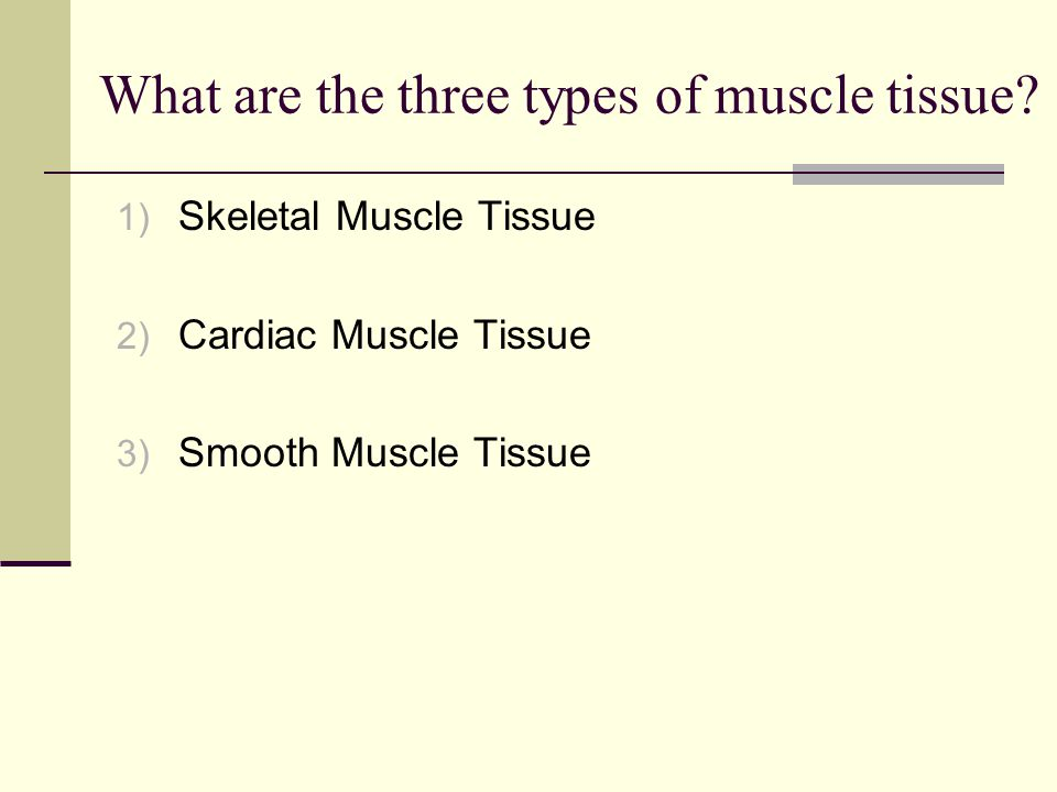What are the three types of muscle tissue.