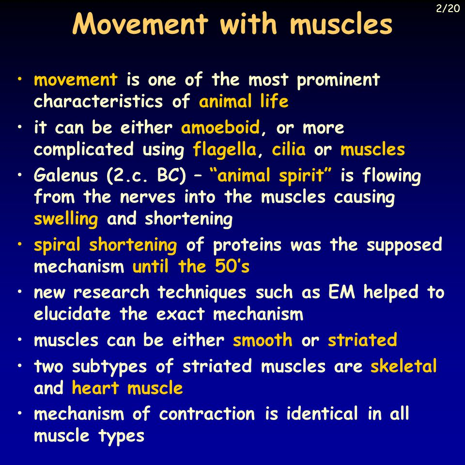 Movement with muscles movement is one of the most prominent characteristics of animal life it can be either amoeboid, or more complicated using flagella, cilia or muscles Galenus (2.c.