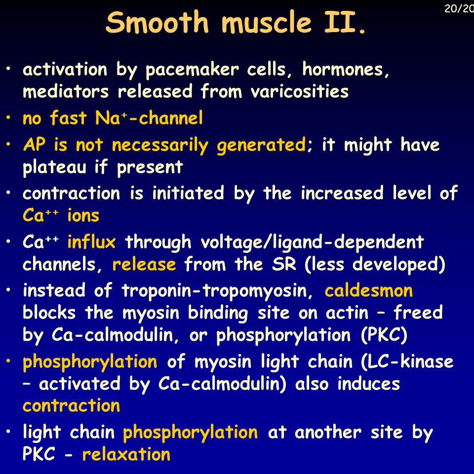 Smooth muscle II.