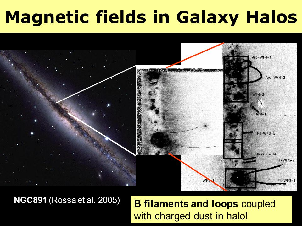 Magnetic fields in Galaxy Halos B filaments and loops coupled with charged dust in halo! NGC891 (Rossa et al. 2005)