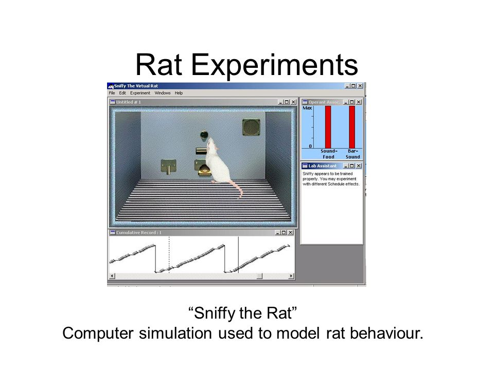 Rat Experiments Sniffy the Rat Computer simulation used to model rat behaviour.