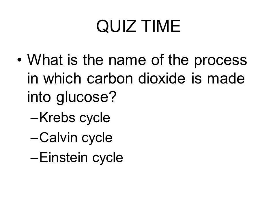 QUIZ TIME What is the name of the process in which carbon dioxide is made into glucose? –Krebs cycle –Calvin cycle –Einstein cycle