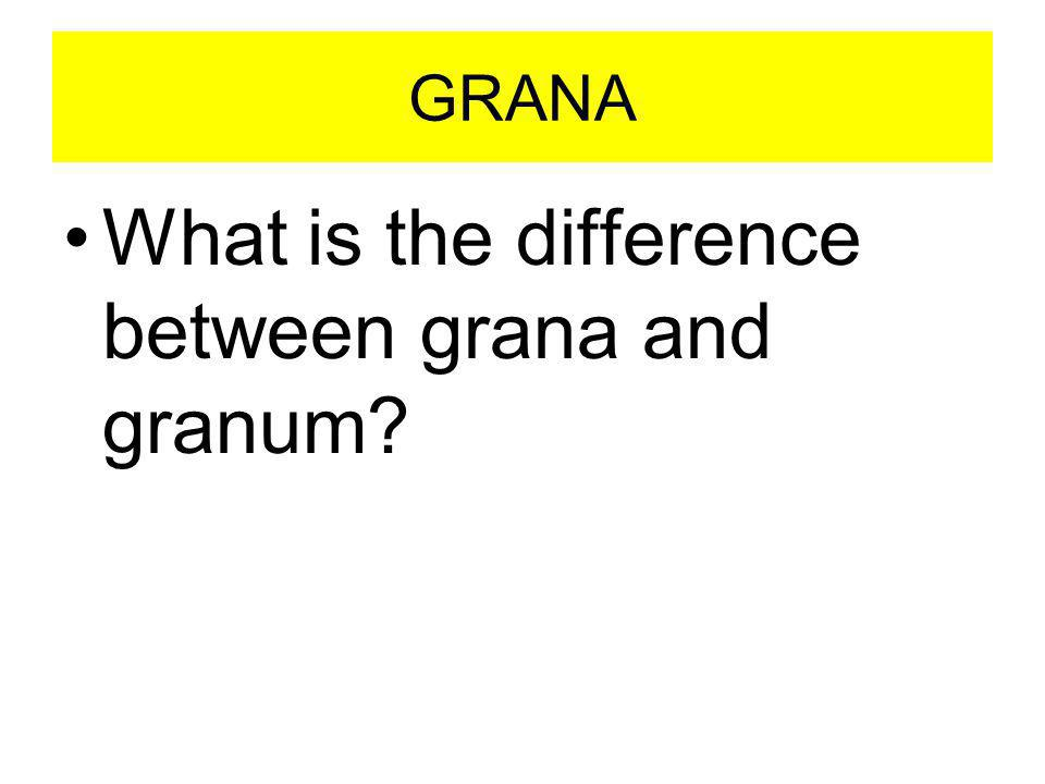 GRANA What is the difference between grana and granum?