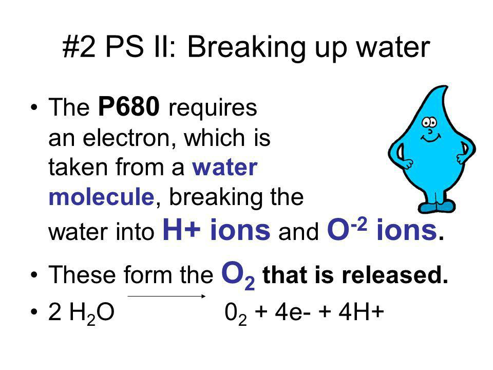 #2 PS II: Breaking up water The P680 requires an electron, which is taken from a water molecule, breaking the water into H+ ions and O -2 ions. These