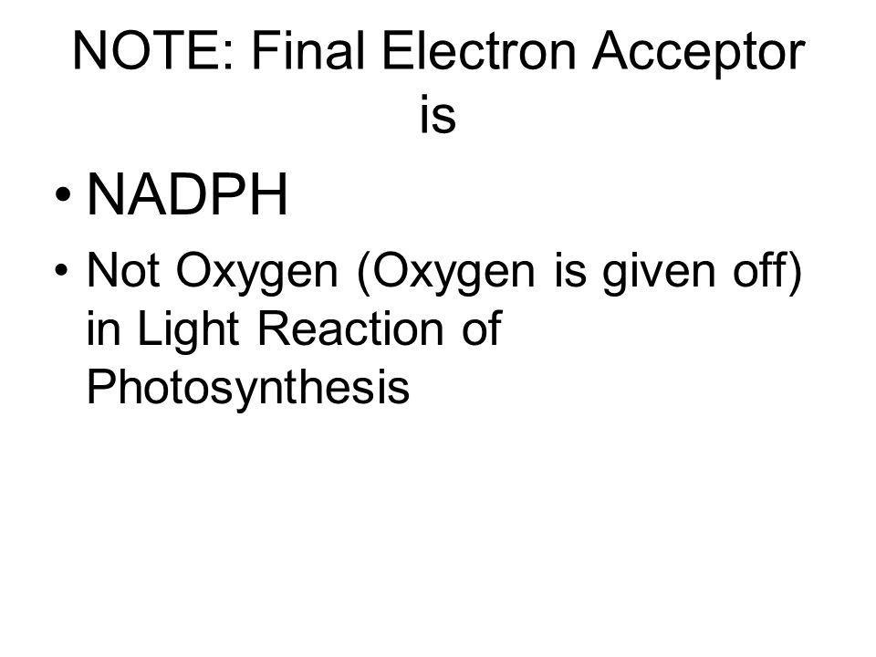 NOTE: Final Electron Acceptor is NADPH Not Oxygen (Oxygen is given off) in Light Reaction of Photosynthesis