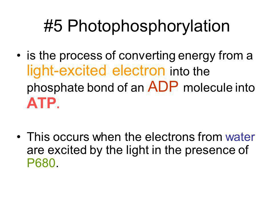 #5 Photophosphorylation is the process of converting energy from a light-excited electron into the phosphate bond of an ADP molecule into ATP. This oc