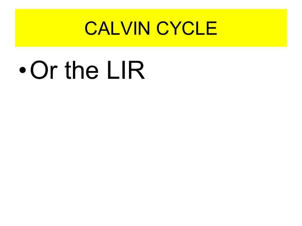 CALVIN CYCLE Or the LIR