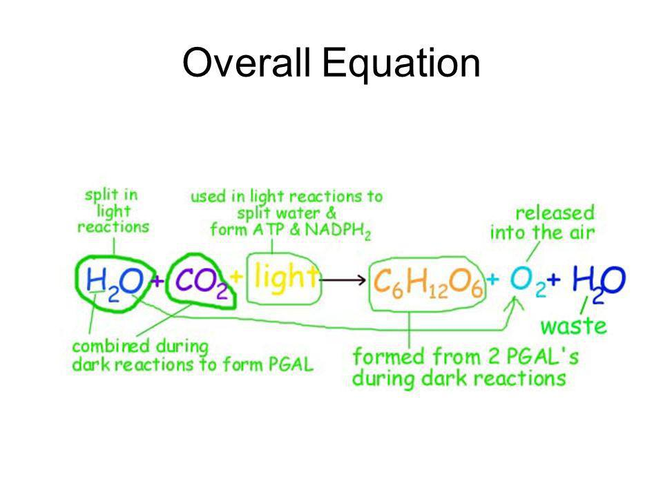 Overall Equation