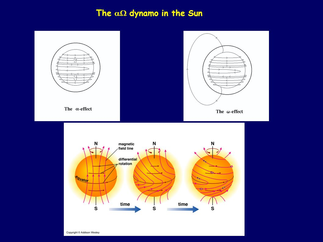 The dynamo in the Sun