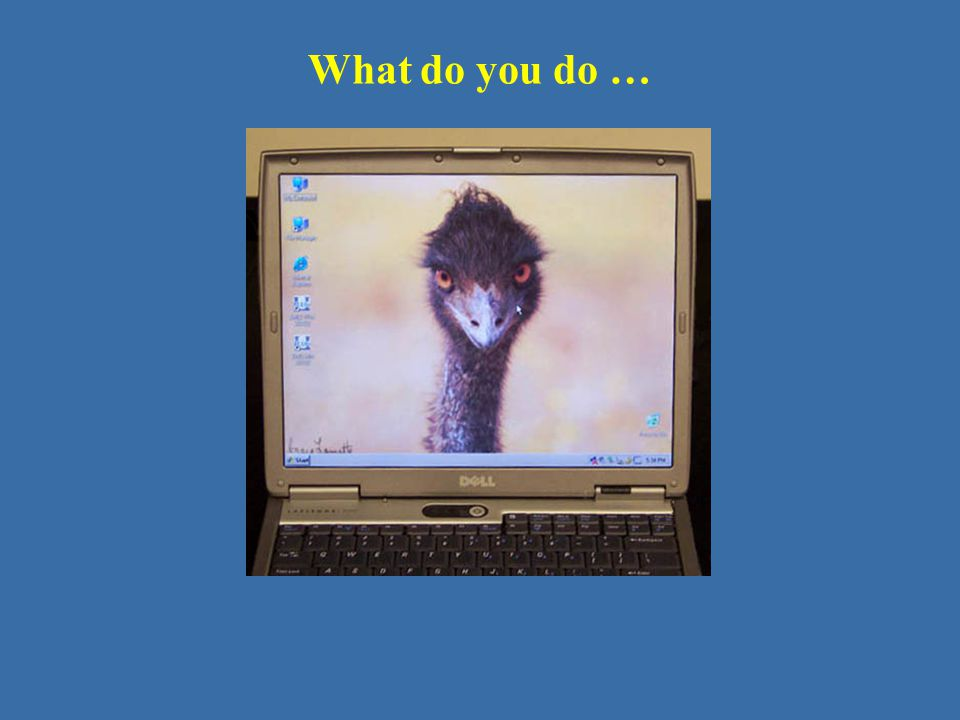 What do you do …