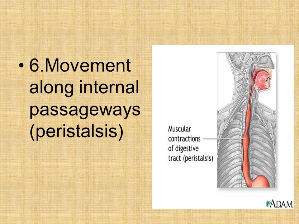 6.Movement along internal passageways (peristalsis)