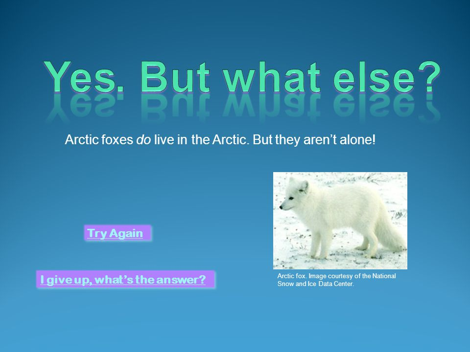 Polar bears do live in the Arctic. But they arent alone.