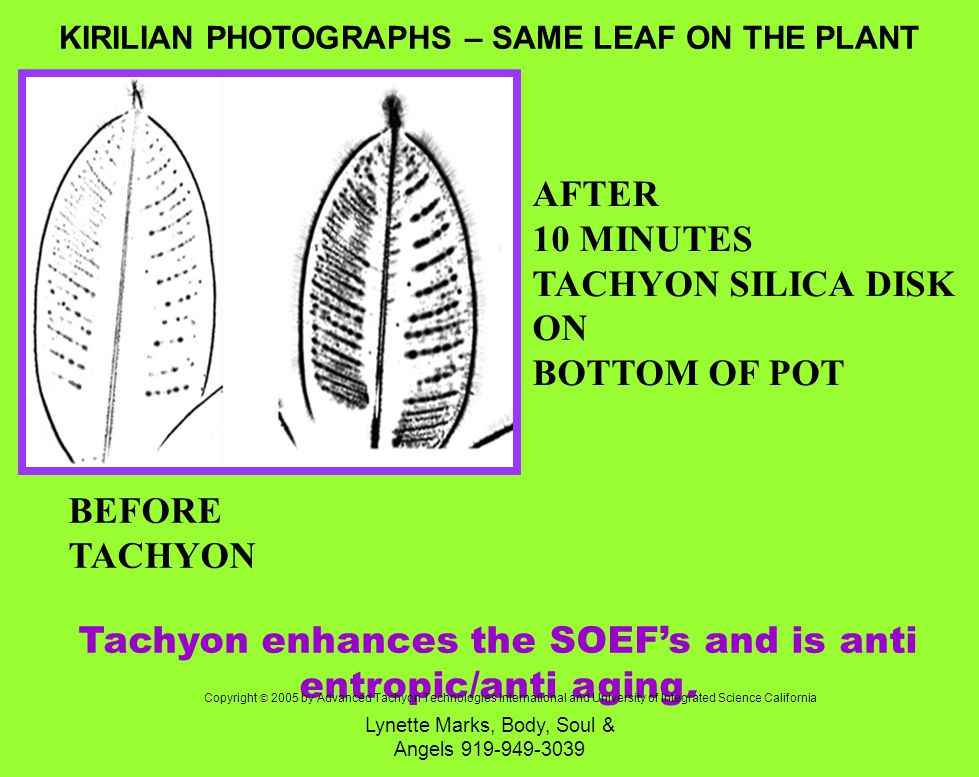 Lynette Marks, Body, Soul & Angels 919-949-3039 BEFORE TACHYON AFTER 10 MINUTES TACHYON SILICA DISK ON BOTTOM OF POT Tachyon enhances the SOEFs and is anti entropic/anti aging.