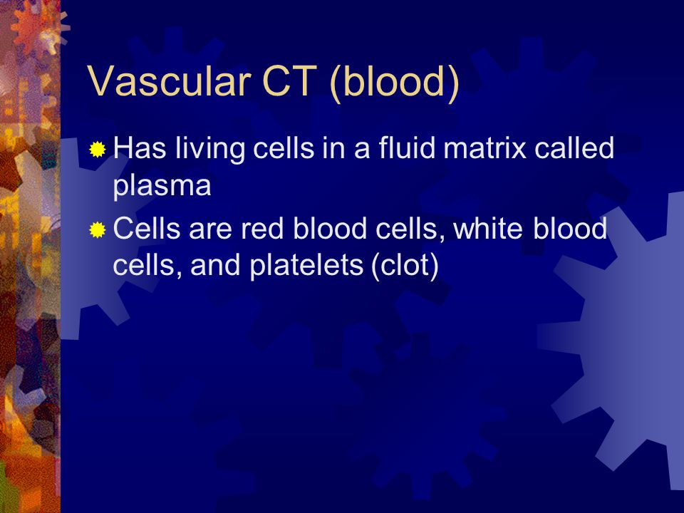 Vascular CT (blood) Has living cells in a fluid matrix called plasma Cells are red blood cells, white blood cells, and platelets (clot)
