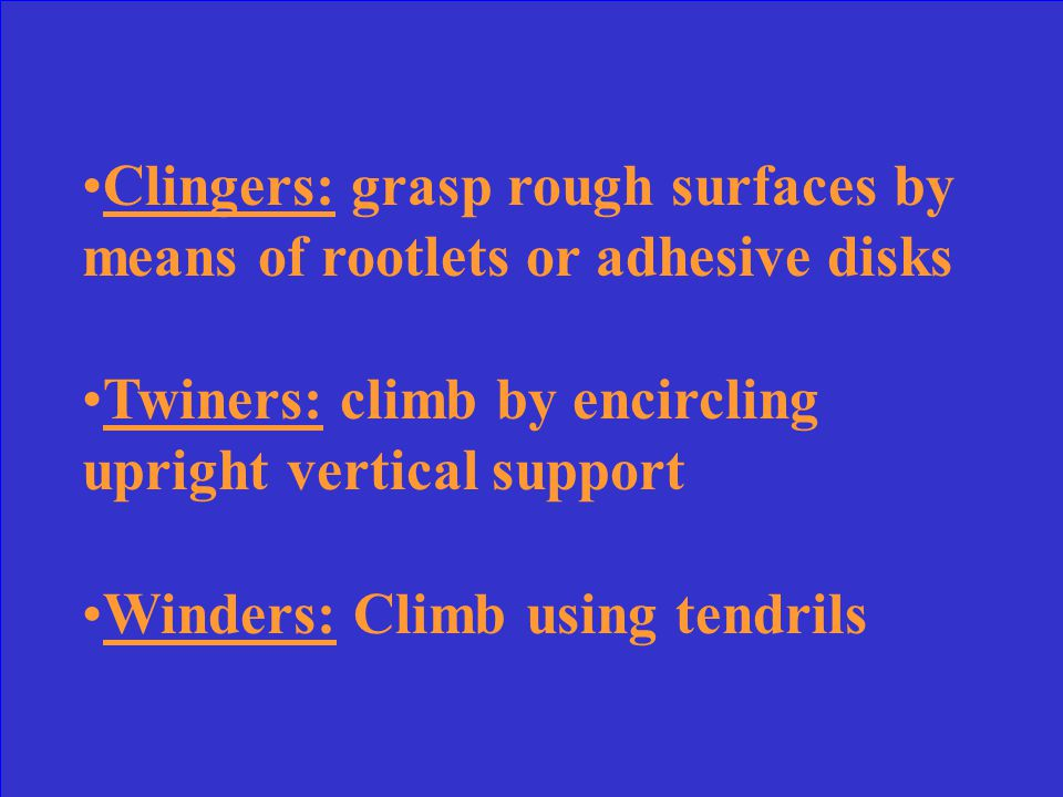 What are the three categories that vines can be separated into and describe them.
