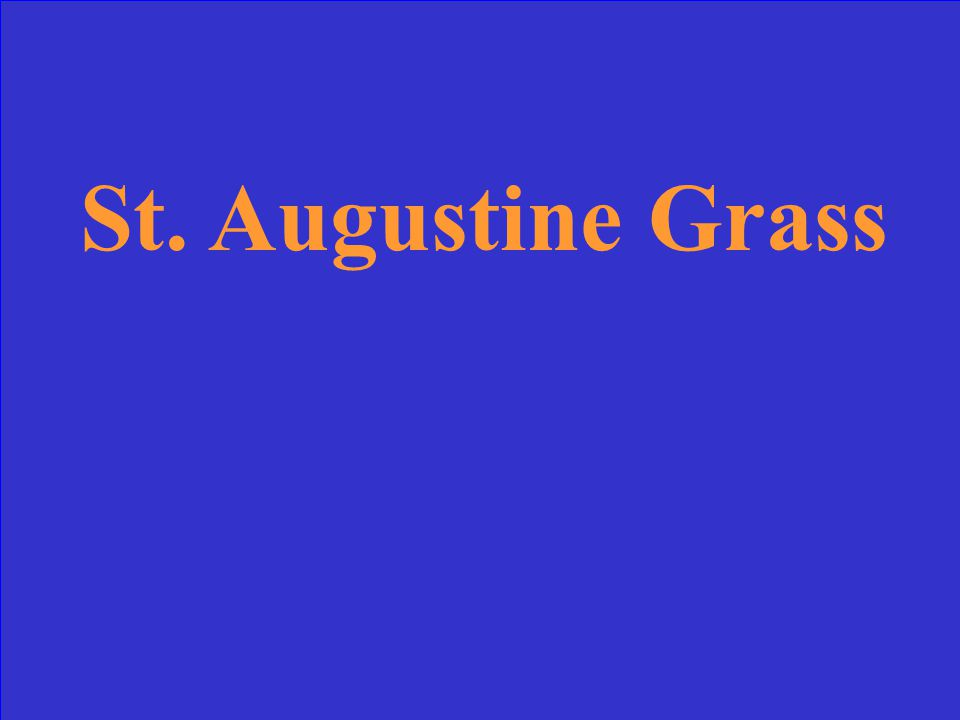 Turf with excellent shade rating, excellent salt tolerance, fair rating for low maintenance and considered second best turf in FL for drought tolerance