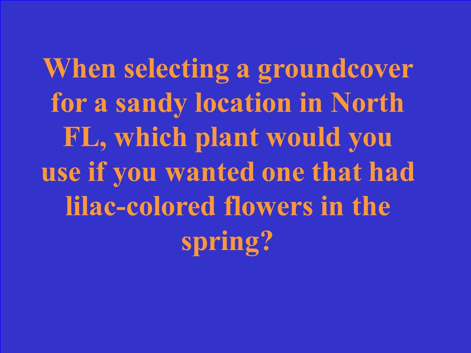 When selecting a groundcover for a sandy location in North FL, which plant would you use if you wanted one that had lilac-colored flowers in the spring?