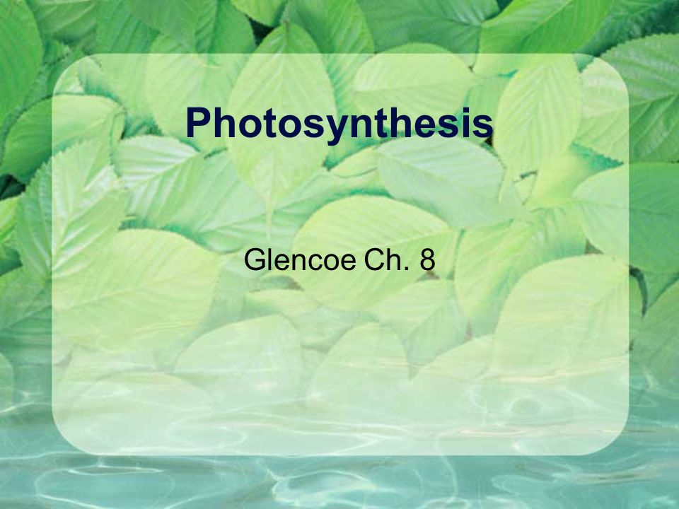 http://www.fw.vt.edu/dendro/forestbiology/photosynthesis.swf