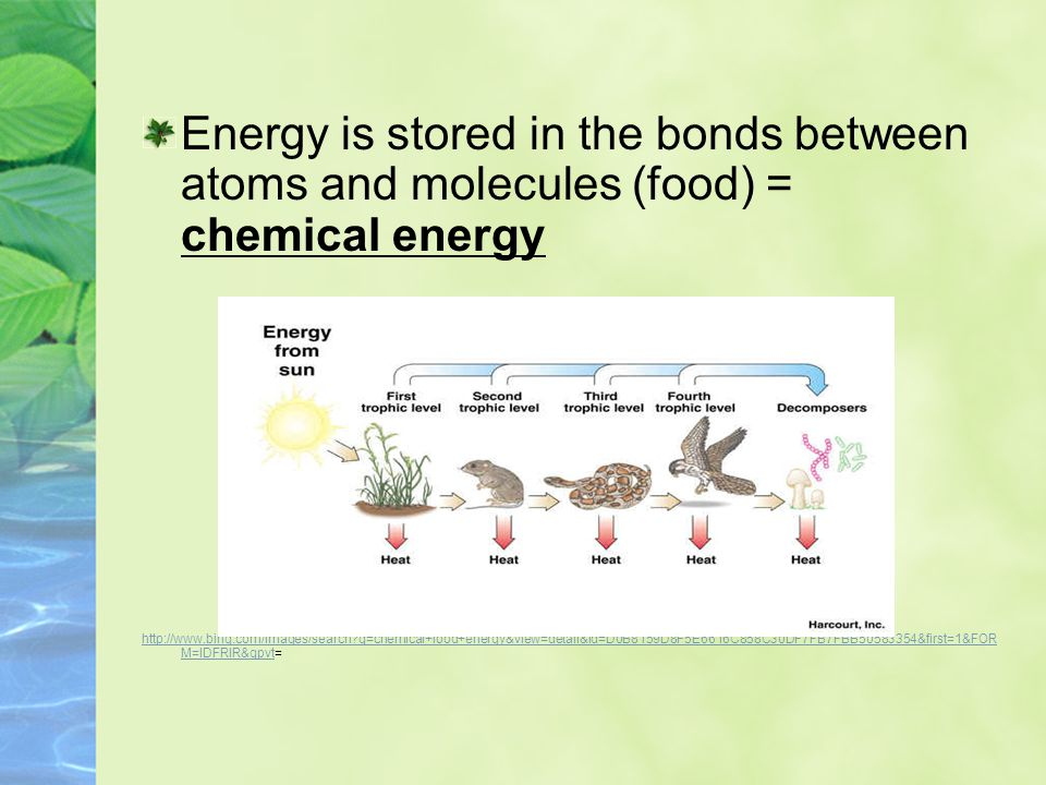 Plants change light energy into chemical energy which is stored in the bonds of glucose molecules that make up organisms.