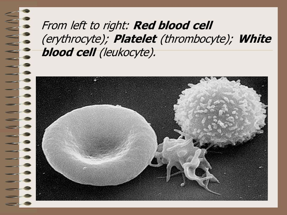 Activated Platelets Donating Platelets