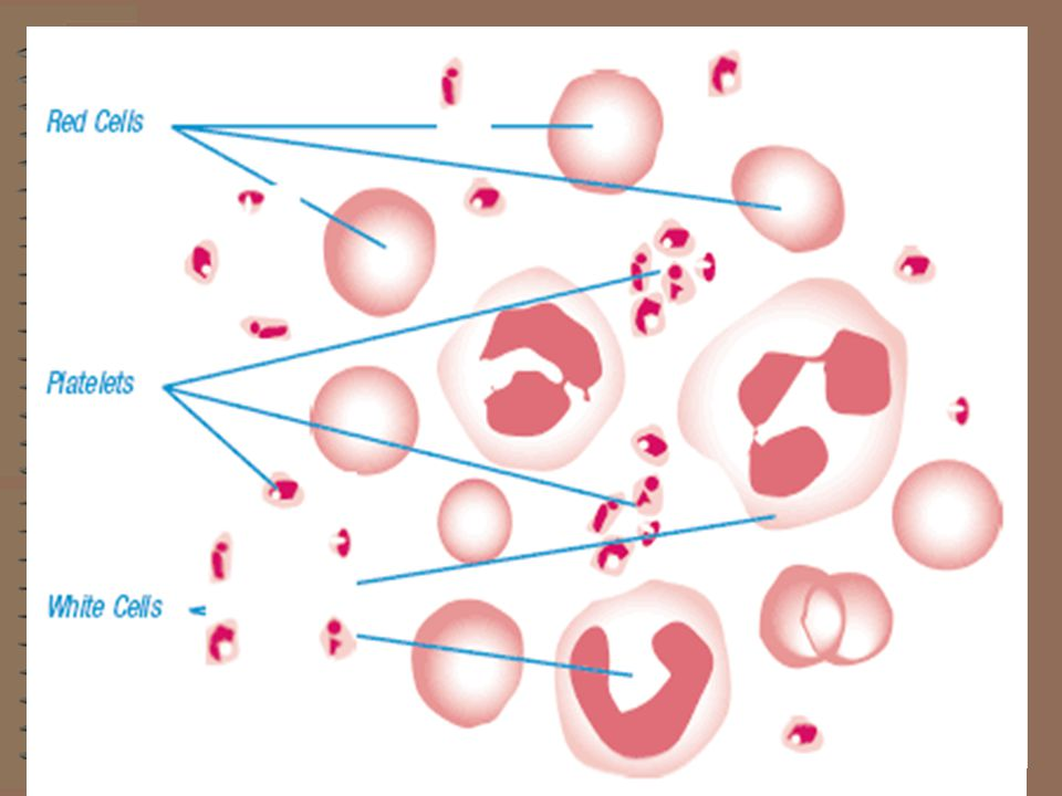 From left to right: Red blood cell (erythrocyte); Platelet (thrombocyte); White blood cell (leukocyte).