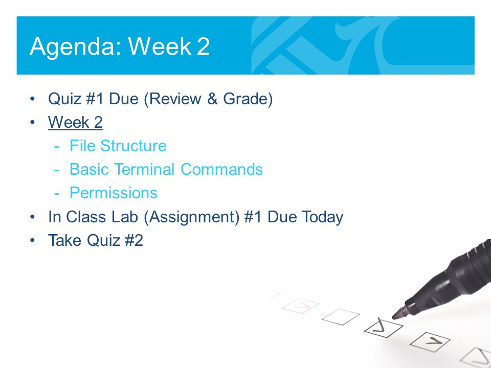 Review essential user commands (/bin)