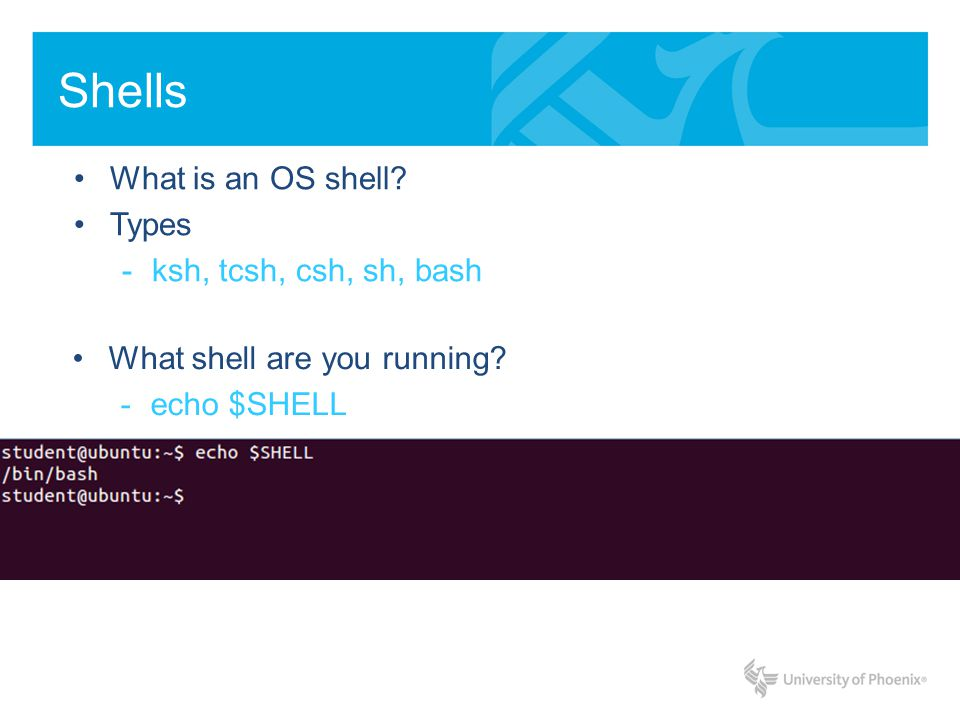 Shells What is an OS shell. Types -ksh, tcsh, csh, sh, bash What shell are you running.