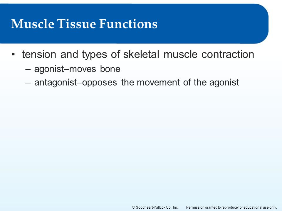 Permission granted to reproduce for educational use only.© Goodheart-Willcox Co., Inc. tension and types of skeletal muscle contraction –agonist–moves