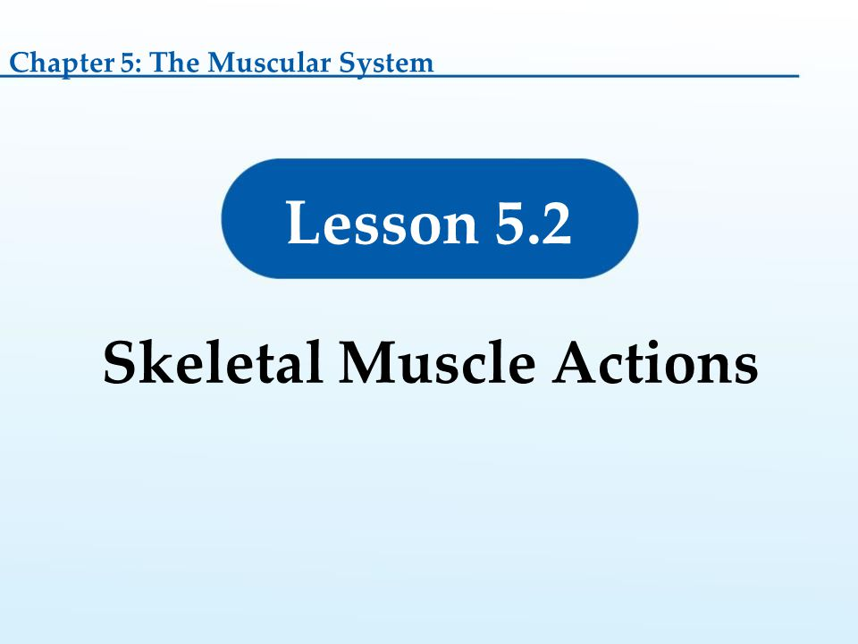 Lesson 5.2 Skeletal Muscle Actions Chapter 5: The Muscular System