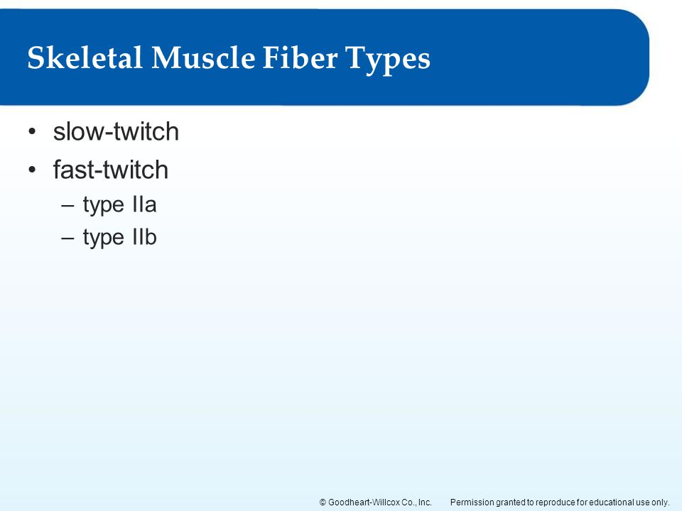 Permission granted to reproduce for educational use only.© Goodheart-Willcox Co., Inc. slow-twitch fast-twitch –type IIa –type IIb Skeletal Muscle Fib