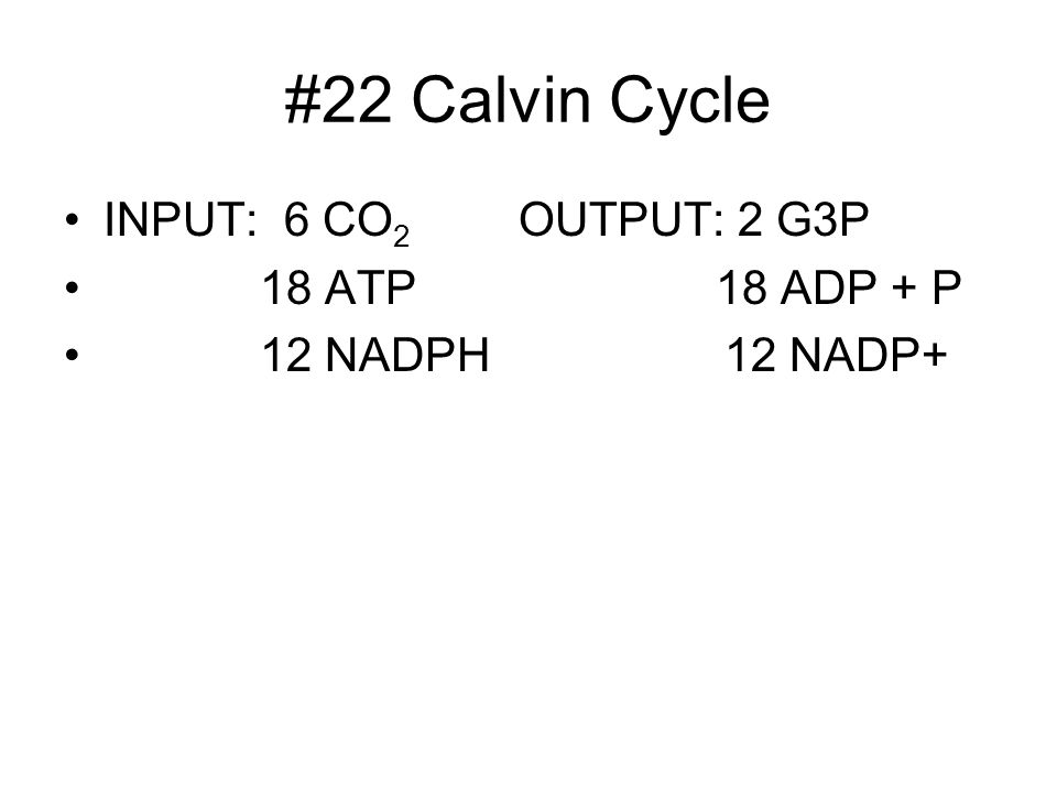 #22 Calvin Cycle INPUT: 6 CO 2 OUTPUT: 2 G3P 18 ATP 18 ADP + P 12 NADPH 12 NADP+