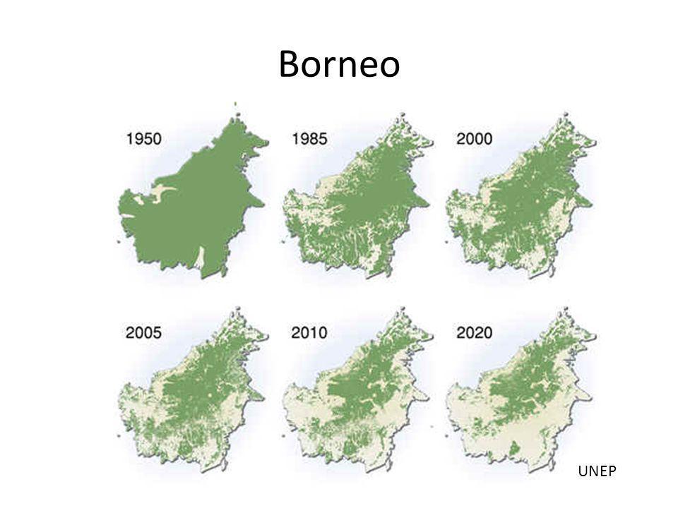 Borneo UNEP