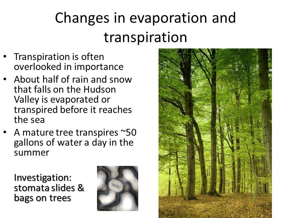 Changes in evaporation and transpiration Transpiration is often overlooked in importance About half of rain and snow that falls on the Hudson Valley is evaporated or transpired before it reaches the sea A mature tree transpires ~50 gallons of water a day in the summer Investigation: stomata slides & bags on trees