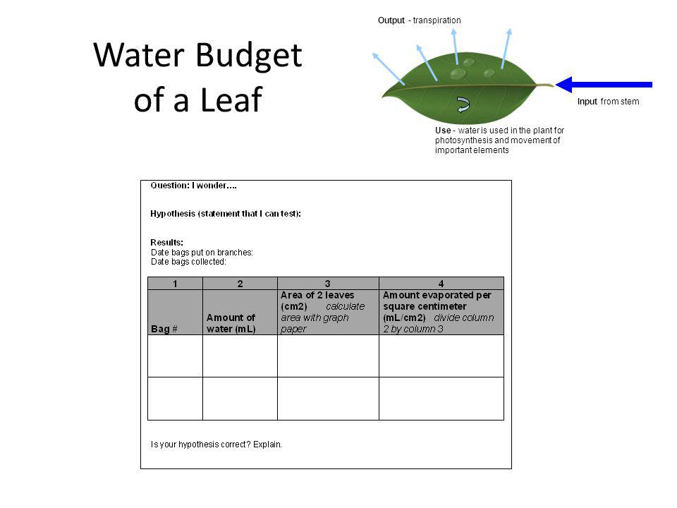 Water Budget of a Leaf Input from stem Output - transpiration Use - water is used in the plant for photosynthesis and movement of important elements