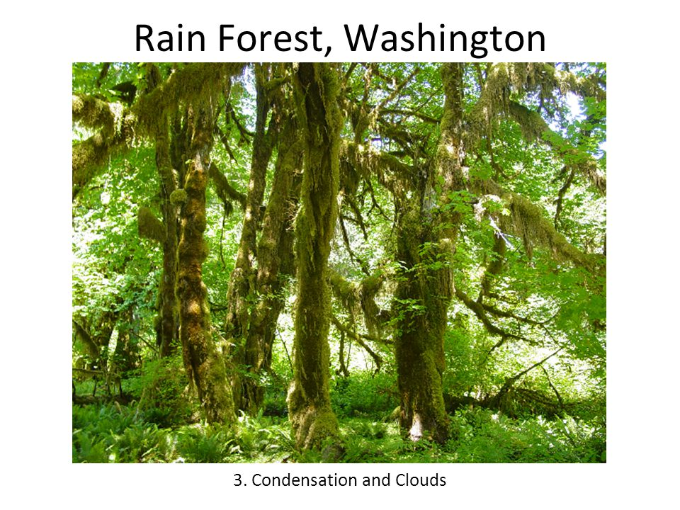 Rain Forest, Washington 3. Condensation and Clouds